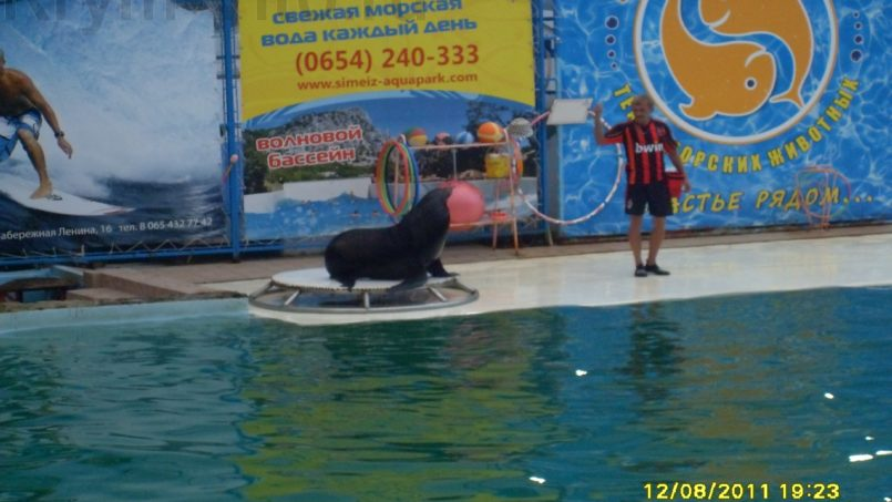 Дельфинарии в Ялте